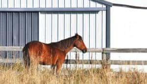 Steel building horse stables