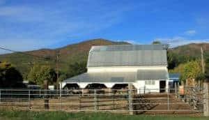 Metal building horses stables